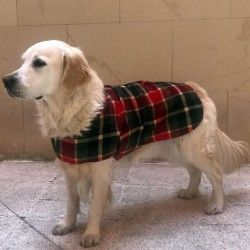 Britain Wool Coat for Dog
