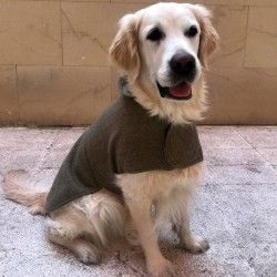 Green Wool Coat for Dog