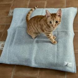 Blue Wool Plaid Dog & Cat
