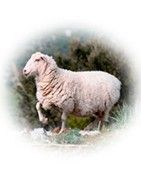 Entwicklungen & Nachrichten 100% Wolle | GRAZALEMA