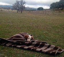 picnic blanket throw